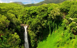 Waterfalls of Hawaii - Makahiku Falls