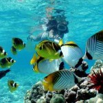 Top Hawaii Snorkeling Spots