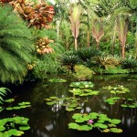 Hawaii Tropical Botanical Gardens – A Garden in a Valley on the Ocean